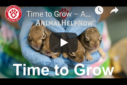 Time to Grow Video